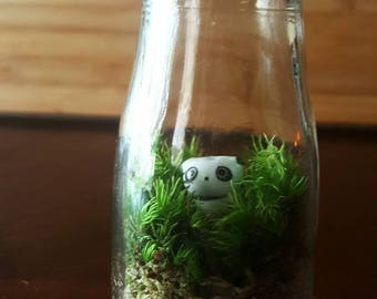 Moss Terrarium》Panda Terrarium 》Mini Ecosystem