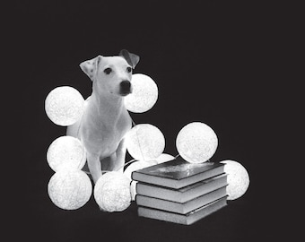 Dog and books postcard for postcrossing // Parson Russell terrier postcard // smart dog fine art print // black and white dog photo
