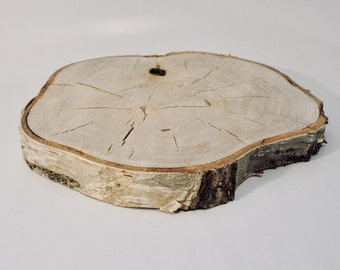 Wood slice of birch as a coaster for decoration and other things, wooden board, Birch disc