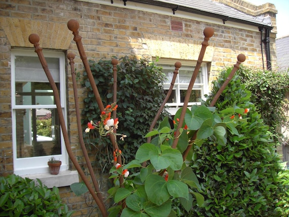 tall bare metal climbing plant support rusted iron garden. Black Bedroom Furniture Sets. Home Design Ideas