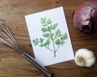 Herb Watercolor Painting Print- Parsley
