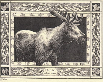 Moose- Alces alces-This 6-pack of blank, ivory cards w/envelopes drawn by Linda Cook DeVona features a pen-and-ink drawing of a moose