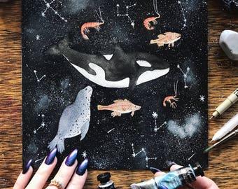 Original - Apex Predators, Orcinus orca