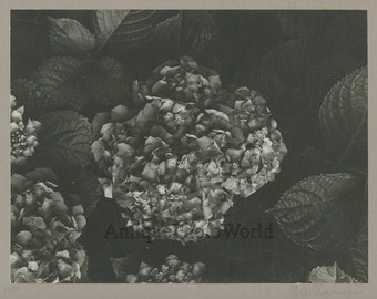 Flower close up vintage art photo by G. A. Eisenman