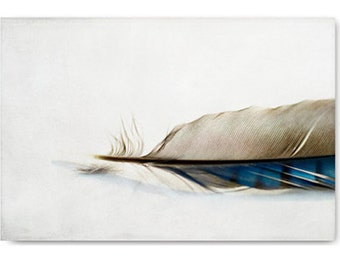 Modern farmhouse decor, Feather photo, feather art, nature photo, modern farmhouse art, nature print, feather photography, feather art print