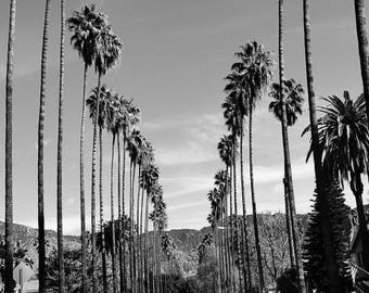 Palm Trees in Los Angeles, California, Black and White, Palm Tree Lined Street Photo, Large Wall Art, California, Los Angeles Photography