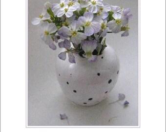 Radish Blossom