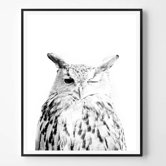 Owl print bird print owl art black and white photography