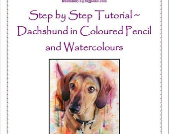 Step by Step Tutorial - Dachshund in Coloured Pencil and Watercolours