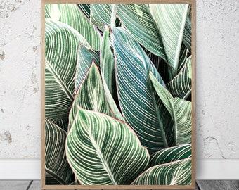 Mint Green Leaf Print, Green Leaves Art, Botanical Poster, Tropical Printable Art, Leaf Digital Print, Nature Photography, Download Print