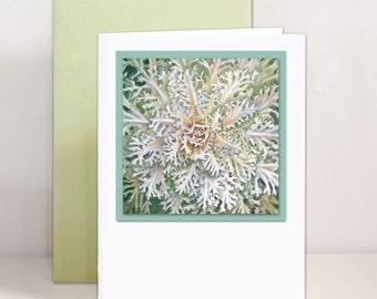 Botanical Illustration Greeting Card - White Flowering Kale