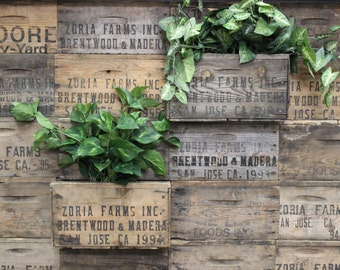Vintage Wood Crates Planters on Wall || Create a wall Garden outside or Inside!