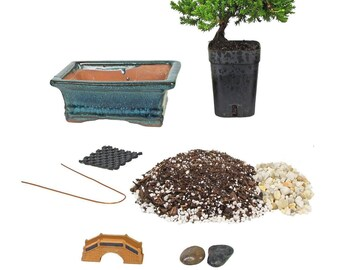 Bonsai Tree Starter Kit, Complete Do-It-Yourself Kit with 2 Year Old Petite Japanese Juniper