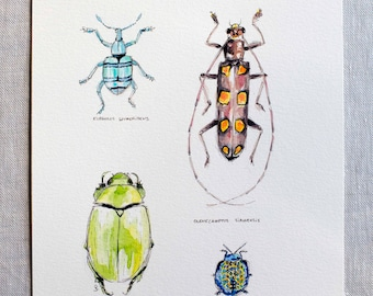 original watercolor painting of insects