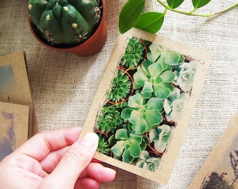 Succulents Cactus Notebook 43. - Mini Pocket Journal - Gift for Her - Plant Lover