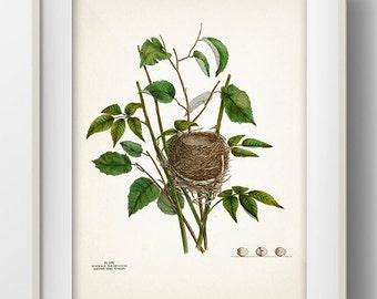 Warbler Bird Nest - NE-04 - Rustic woodland fine art print of a vintage natural history antique illustration
