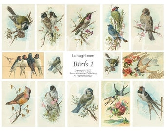 Victorian BIRDS digital collage sheet, DOWNLOAD vintage images Woodland art cards illustrations, garden spring nature ephemera, printables