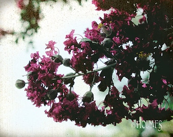 Crepe Myrtle Photography Art Print