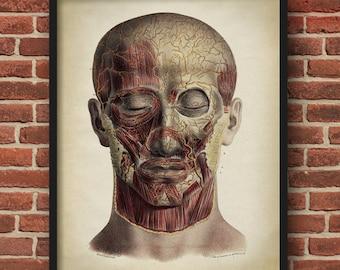 Head Anatomy print, vintage anatomy poster, medical wall art, doctor gift, anatomy poster, anatomy print, home decor
