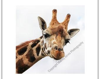 Greeting Card Birthday Notelet Thank You Blank - Giraffe Tall Animal Face Portrait