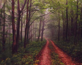 Fog Photograph - Tree Photograph - Woodland Decor - Forest - Michigan - Nature Photography - Summer - Cottage Wall Art - Green Brown Art