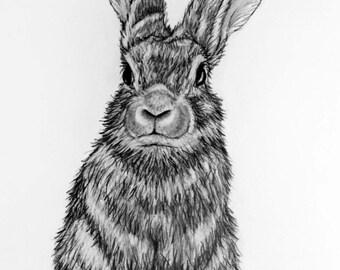Bunny Rabbit pencil drawing - 66 Rabbit