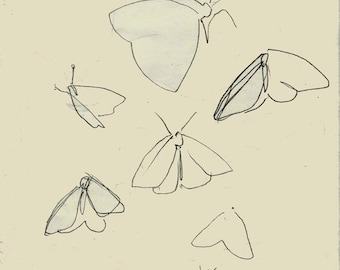 PRINT, Pencil Butterflies', pencil sketch, original illustration, butterfly, nature, line drawing, insects, beige, cream