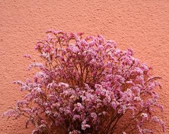 Spray of Pink, photographic print