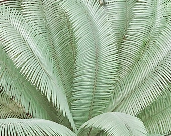 Green Palm Photography, Palm Print, Giant Palm Art, Jungle Print, Green Palm Leaf Prints, Large Palm Wall Art, Jungle Art, Green Bedroom Art