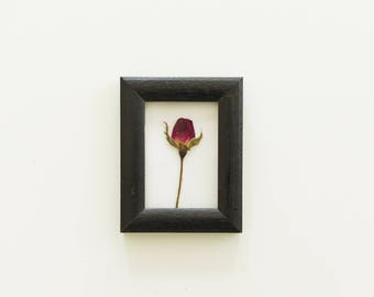 Pressed Rose Bud, Dried Flower, Black frame