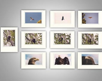 Birds of Prey Photo Note Cards (pack of 10)