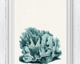 Sea foam coral n02 - sea life print- Antique sealife Illustration - Marine  sea life illustration A4 print SWC024