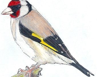 Blank Greetings Card Gazing Goldfinch bird drawing