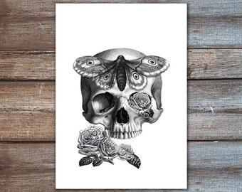 art print skull roses - moth print - tattoo art giclee print
