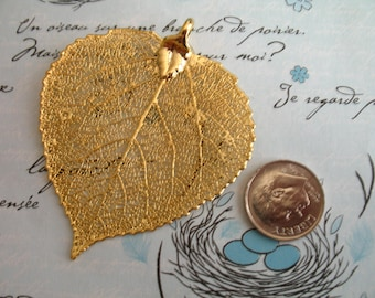 Shop Sale .. Real ASPEN Leaf Dipped, 1.5-2 inch, LARGE, genuine woodland organic weddings bridesmaids gift wholesale solo precious