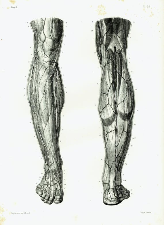 1844 Nerves Muscles Knee Legs Foot Antique Anatomy Muscles
