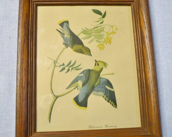 Vintage Bohemian Waxwing Print Wooden Frame with Glass Birds Country Decor PanchosPorch