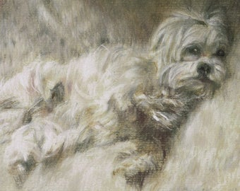 """HOME COMFORTS - Highland Terrier Pastel Print 5"""" x 7"""""""
