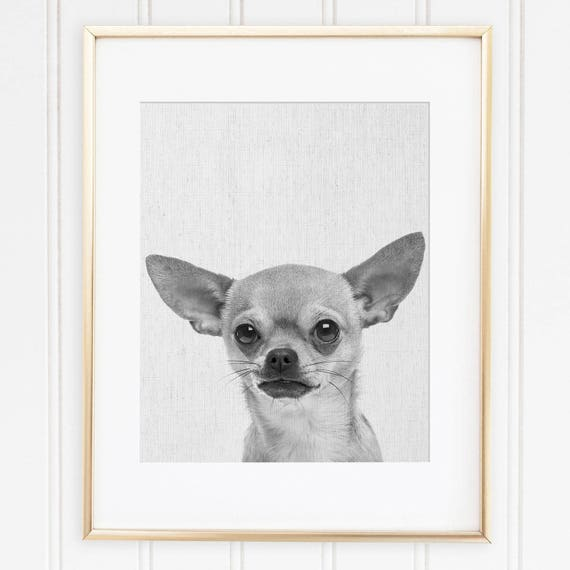 Chihuahua print black and white dog poster chihuahua modern minimalist wall art cute animal instant download printable nursery animal