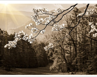 """Hand Made Note Card from William Britten Photography """"A Song Without Words"""""""