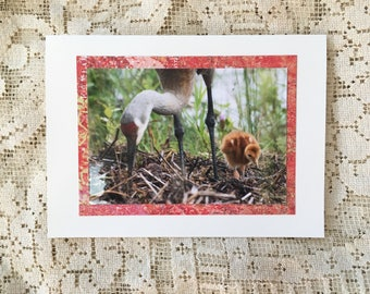 Sandhill Crane | Learning note card