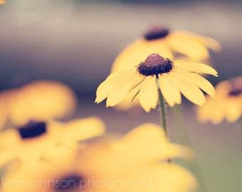 yellow flower photography, nature photography, blackeyed susans, large living room wall art, dining room art, rustic wall art