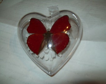 Red Butterfly Hearts Of Love Valentines Forget me Not