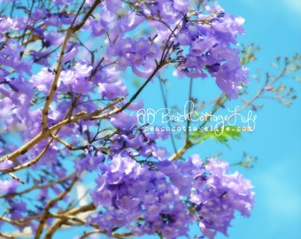 """purple lilac lavender garden floral Spring- tree blooms blossom wall home decor Jacaranda blue sky pastel """"this is spring: island style"""""""