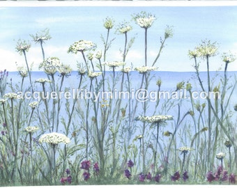 Card pack of 4 -- Queen Anne's Lace -- Blank Note Cards
