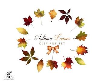 fall leaves clipart etsy rh etsy com clip art fall leaves and pumpkins clip art fall leaves outlines