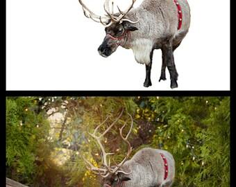 Reindeer Kisses Overlay + Bonus Christmas Tree Farm Background!
