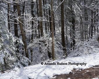 Horizontal Winter Snowy Forest Landscape Off of Gravel Road 4912X2760 pixels Digital Download