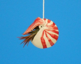 Mini Nautilus,  Hanging Air Planter, Whimsical gift,  Live Ornament, Ornament, Free Shipping