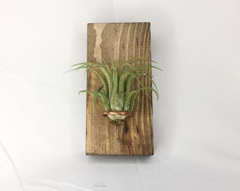 Wood and Copper Air Plant Wall Hanging Mount- Includes Tillandsia Ionantha Air Plant